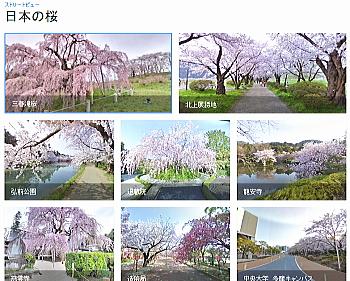 日本の桜をストリートビューコレクション「日本の桜」で見る
